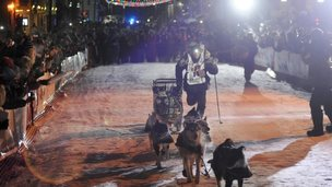 Dallas Seavey runs down the finish chute with his dog team in Nome, Alaska, to win the Iditarod Trail Sled Dog Race on 11 March 2014