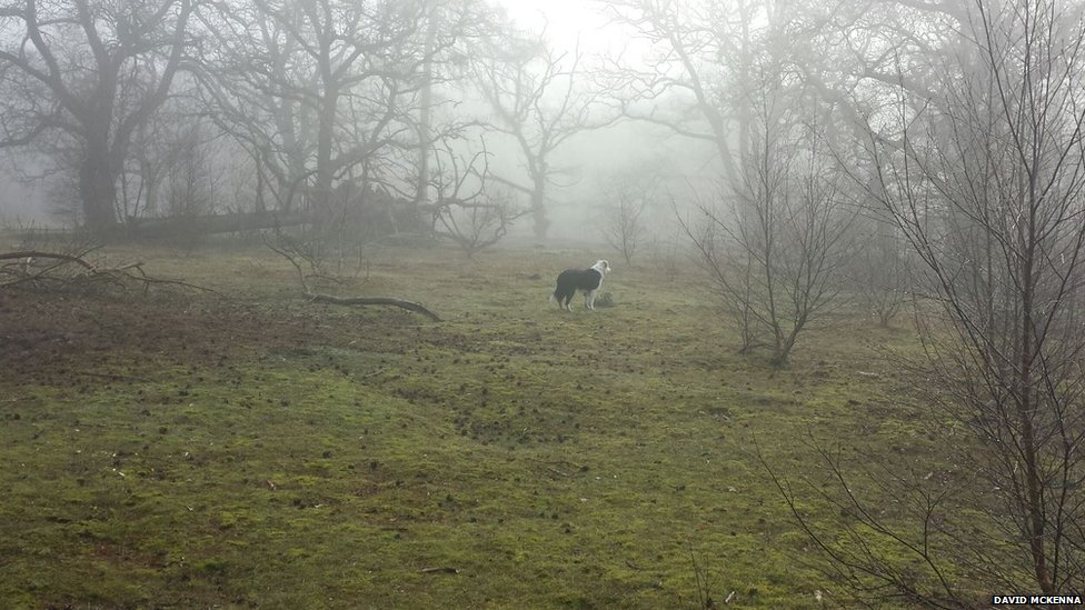 A border collie surveys the fog in Lincolnshire