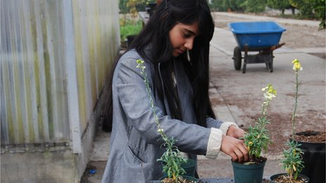 Urfia Abdul plants flowers at Buena Park High School