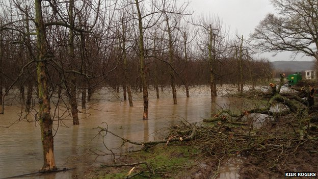 Flooded orchard in Hampton Bishop, Herefordshire
