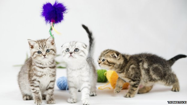 Italy Gets a Cat Cafe