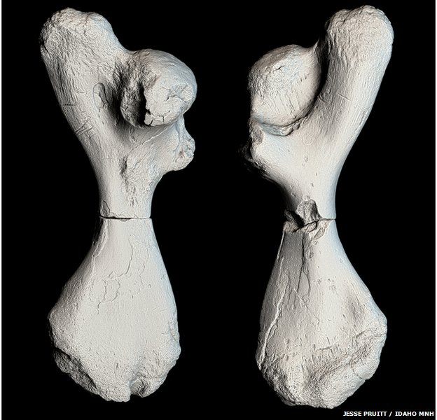 A 3D scan of the two halves