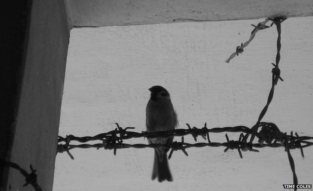 A bird resting on barbed wire