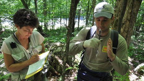 Dr Lips and Ed Kabay measure wild salamanders