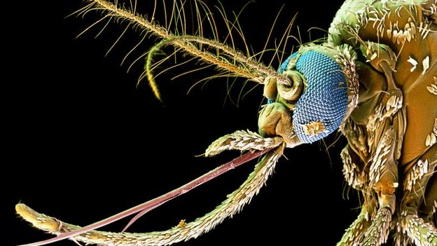 Humanity's global battle with mosquitoes