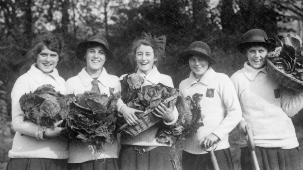Girls harvesting cabbages