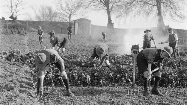 Boys scouts working on an allotment during World War One