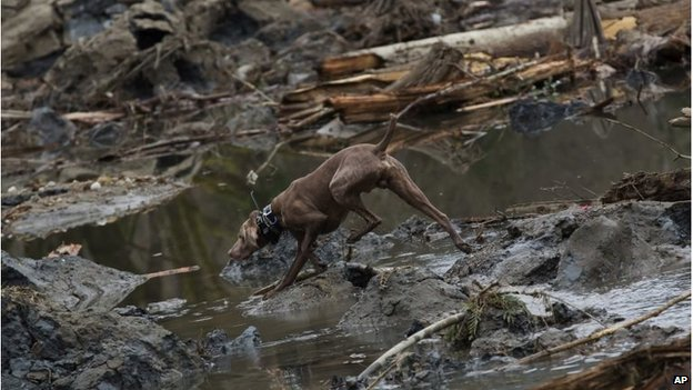 Rescue dog searches mud near Oso, Washington (25 Mar 2014)