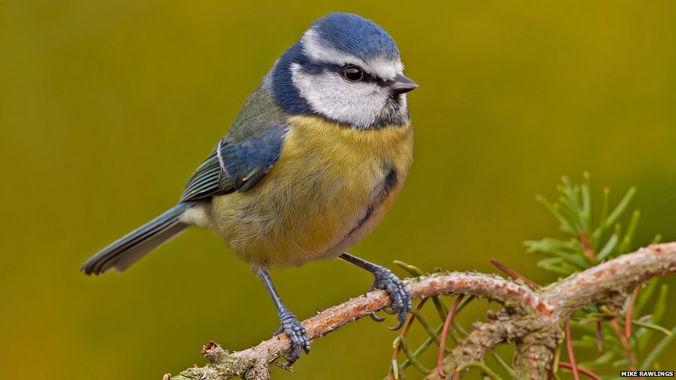BBC Nature In pictures Top British garden birds revealed