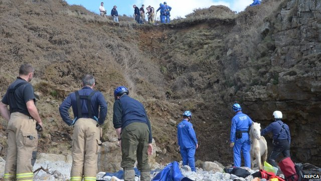 Rescuers preparing to hoist Goldie up the cliff face