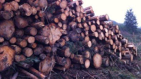 Logging in Powys