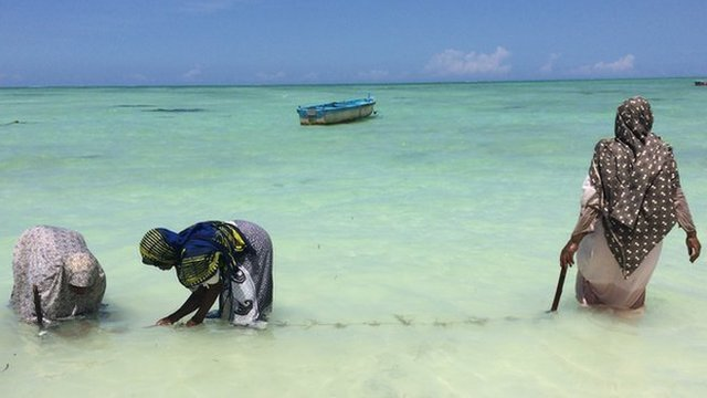 Seaweed farmers in Zanzibar (March 2014)