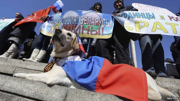 A dog wearing a Russian national flag is seen as pro-Russian demonstrators take part in a rally in central Donetsk on 30 March 2014.