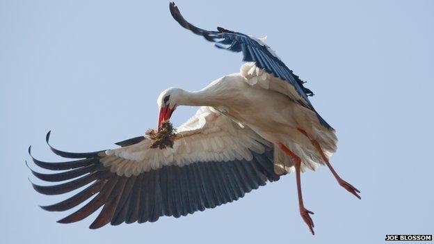 Flying stork