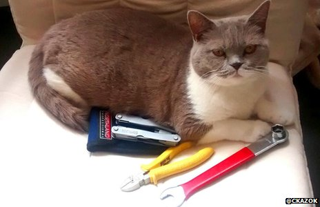 A cat with wire cutting tools