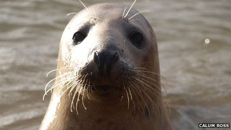 Seal at Ythan Estuary, photo courtesy of Calum Ross