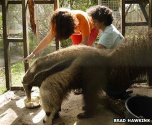 Monique Pool and vet with a giant anteater