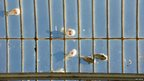 Birds on a glass roof