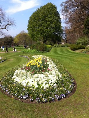 Formal garden and Caucasian elm, Hyde Park (Image: BBC)