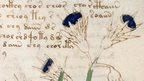 Detail from the Voynich Manuscript