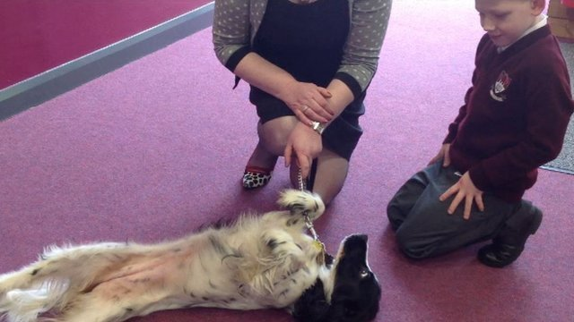 Rosstulla teacher and pupil petting Poppy the school dog