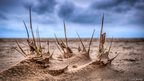 Shoots of growth on the beach at Lytham St Annes