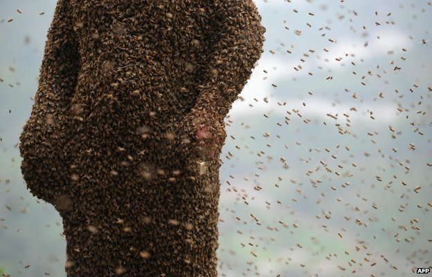 Man in China covered in bees