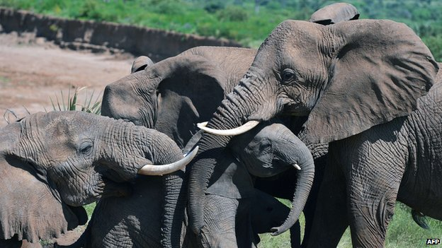 Elephants in Kenyan reserve