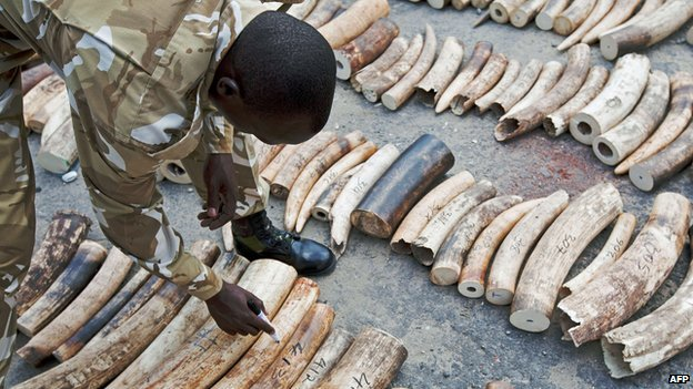 Kenyan official marks confiscated ivory