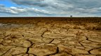 Cracks in dry mud in the foreground. The field of mud expands back to the horizon where it meets a lone tree and a cloudy sky.