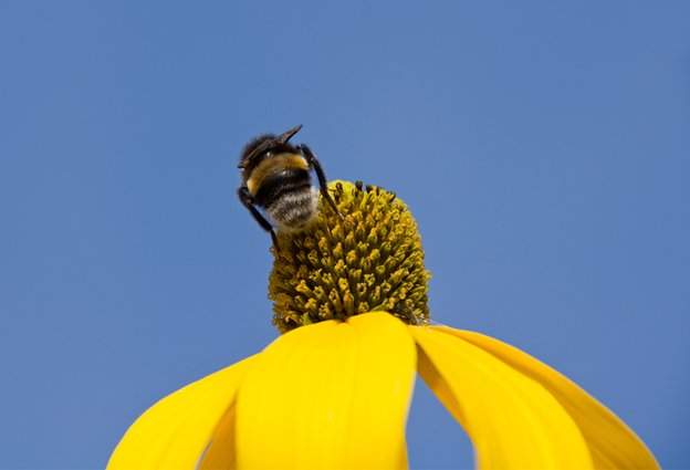 A bee rests on a yellow flower
