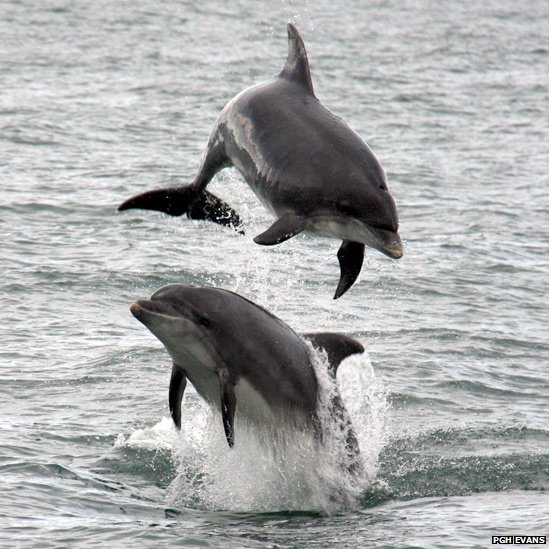 Dolphins leaping from the water