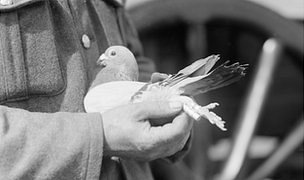 Pigeon in soldier's hand
