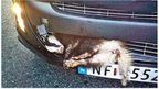 Badger stuck in a car bumper