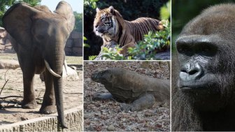 elephant, tiger, gorilla and komodo