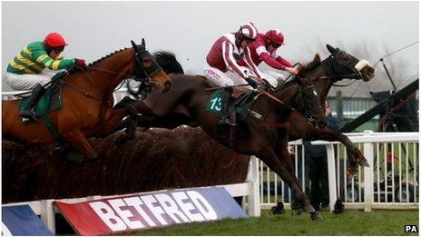 Horses at Cheltenham
