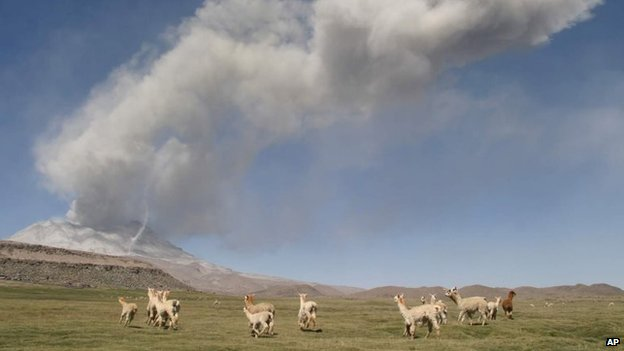 A group of Alpacas run with the Ubinas Volcano in the background, on April 20, 2006.