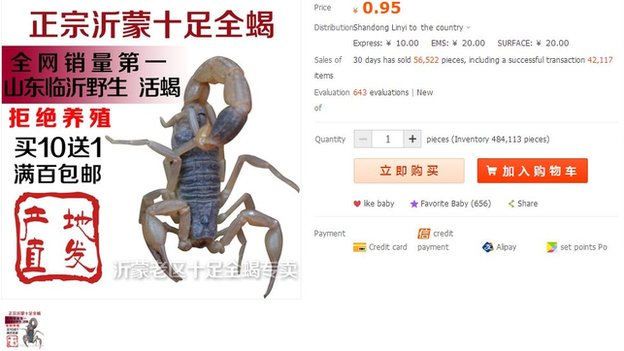 Scorpion for sale