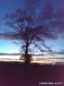 Tree in Tudhoe