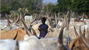 A boy surrounded by a herd in Lakes state, South Sudan (20 February 2014)
