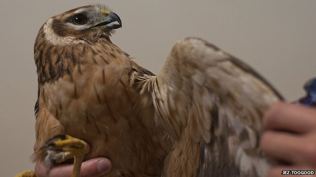 Malta criticised for mass bird shoot