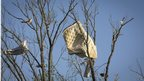 A mattress is stuck in a tree after a tornado near Vilonia, Arkansas 28 April 2014.