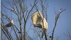 A mattress is stuck in a tree after a tornado near Vilonia, Arkansas 28 April 2014.