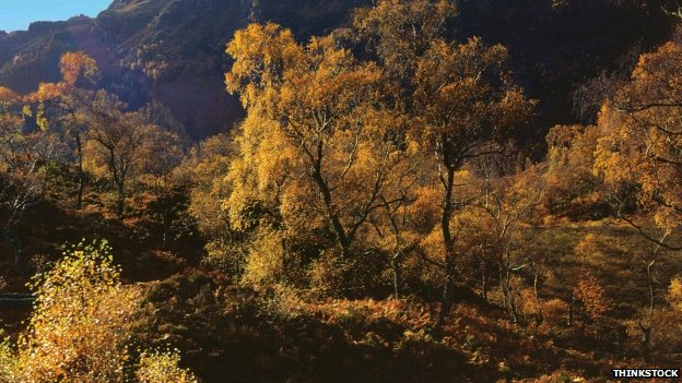 Great Trossachs Forest
