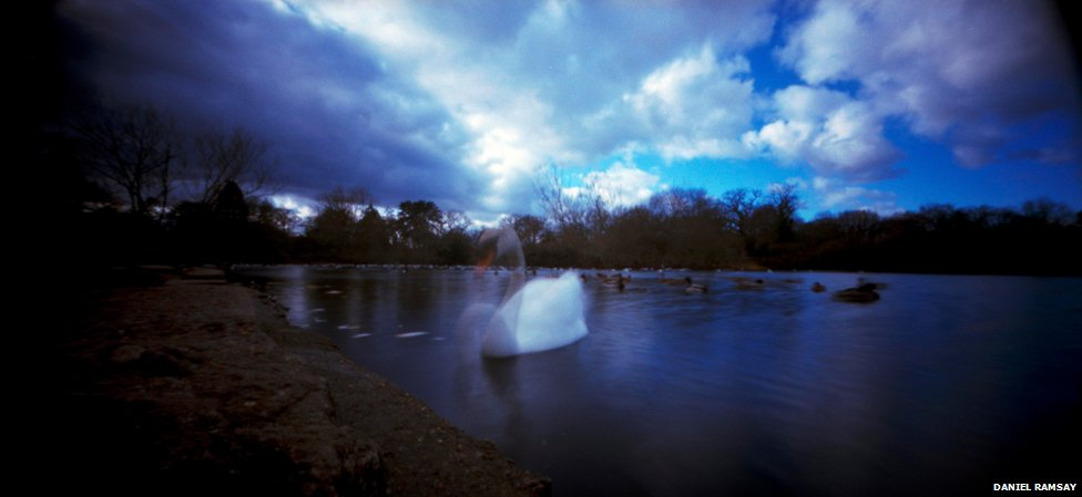 Because This Beautiful Color Image Required A 30 Second Exposure The Swans Head And Neck Are Blurred Out As If Captured In Several Positions