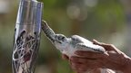 A turtle extends one flipper to touch the Queen's Baton.
