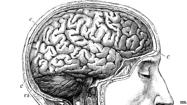 19th Century brain