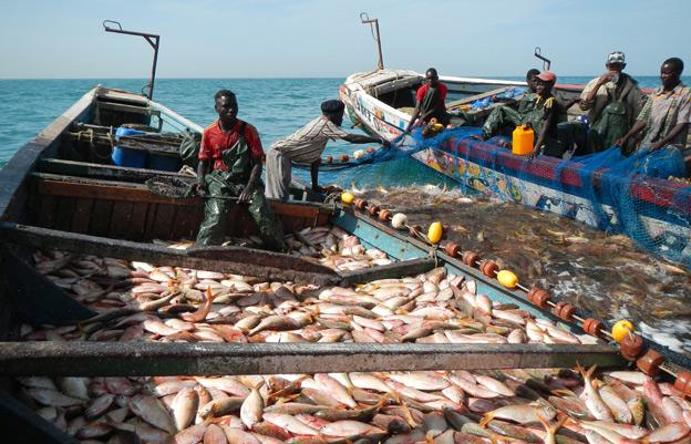 Fishing boats heaving with fish