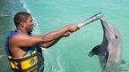 Baton with dolphin