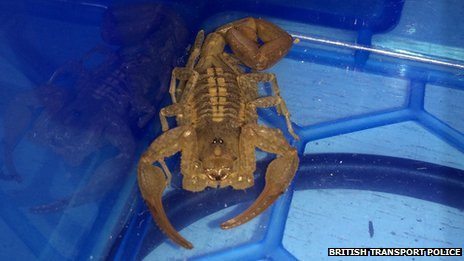 A scorpion similar to the one found on the Tube